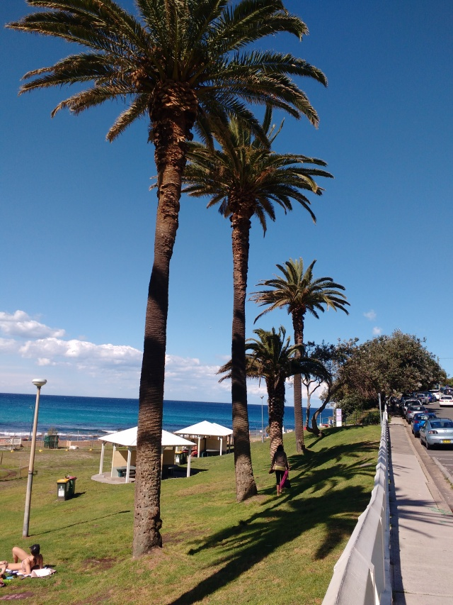 palm trees, grass, ocean at Bronte Beach on sunny day